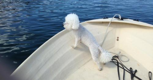 Taz on the boat